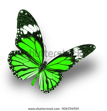 Beautiful Green butterfly upper wing profile flying up