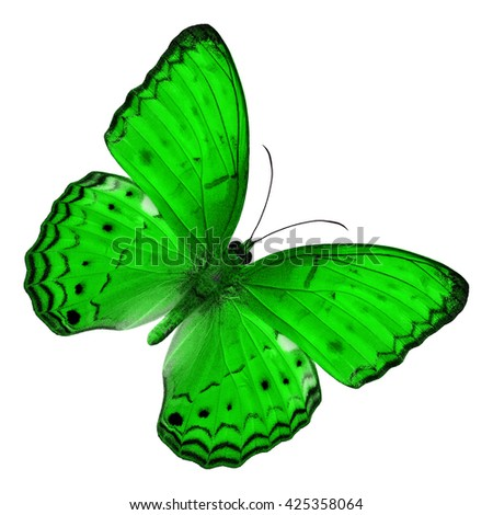 Beautiful Green butterfly upper wing profile isolated on white background.