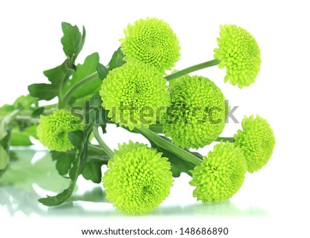 Beautiful green chrysanthemum isolated on white - stock photo