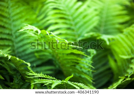 Beautiful green fern stems and leaves (Pteridophyta) - stock photo