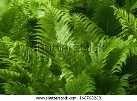 Beautiful green ferns with sunlight hitting them. This photo has been given a Photoshop effect to make it look like an oil painting. - stock photo