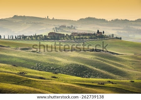 Beautiful green field and the Tuscany landscape - stock photo