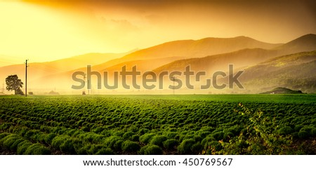 Beautiful green field in mist at sunset.