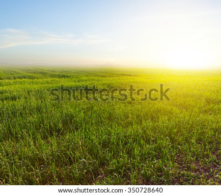 beautiful green fields at the early morning - stock photo
