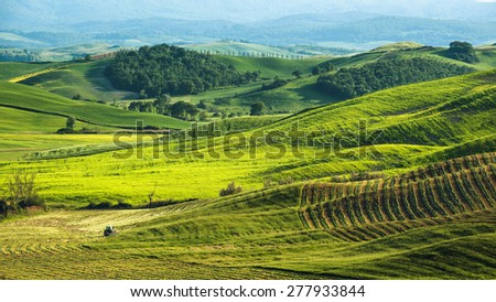 Beautiful green fields in the the landscape of Tuscany - stock photo