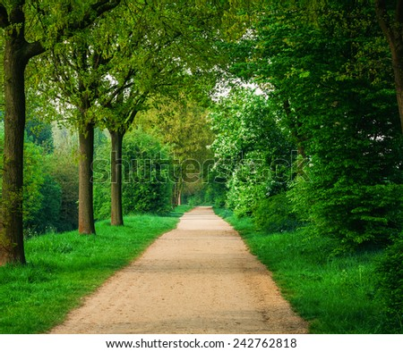 beautiful green forest.  forest park road view - stock photo