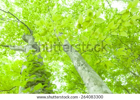 Beautiful green forest in early summer. - stock photo