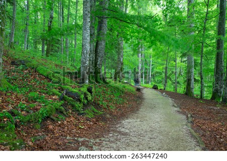 Beautiful green forest in national park Plitvica, Croatia - stock photo
