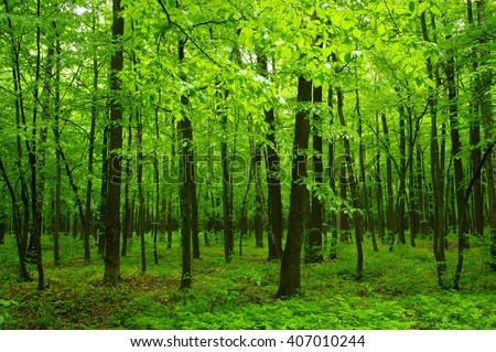 beautiful green forest in spring - stock photo