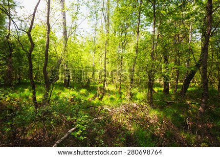 Beautiful green forest in spring. Nature reserve in Germany