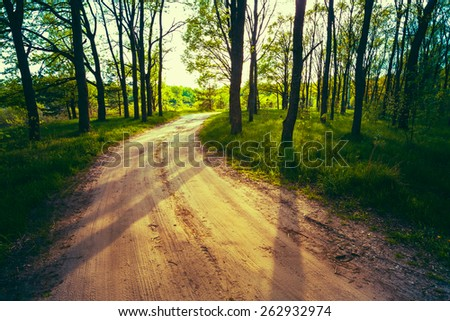 Beautiful Green Forest In Summer. Countryside Road, Path, Way, Lane, Pathway On Sunny Day In Spring Forest. Sunbeams Pour Through Trees. Russian Nature. Toned Instant Filtered Image Photo - stock photo
