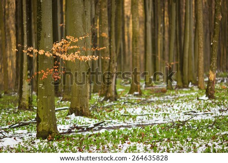 beautiful green forest with snow - stock photo