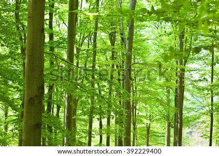 beautiful green forest with tree and leaf  - stock photo