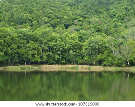 Beautiful green from mount lakeside. - stock photo