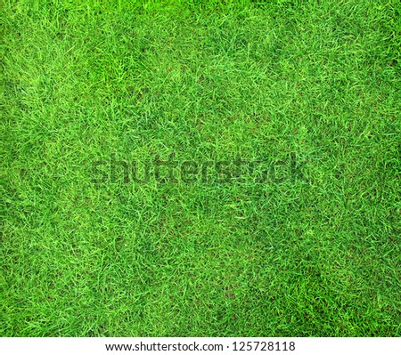 Beautiful green grass texture - stock photo