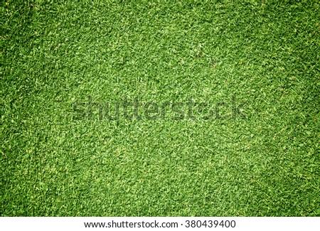 Beautiful green grass texture - stock photo