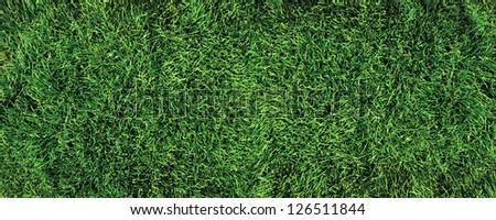 Beautiful green grass texture (golf course) - stock photo