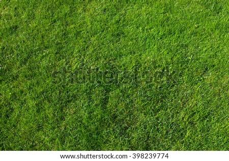 Beautiful green grass texture in garden - stock photo