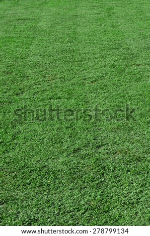 Beautiful green grass - vertical field shot with selective focus - stock photo