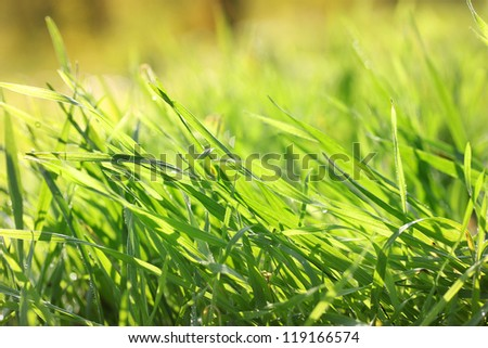 beautiful green grass with dew, close up - stock photo