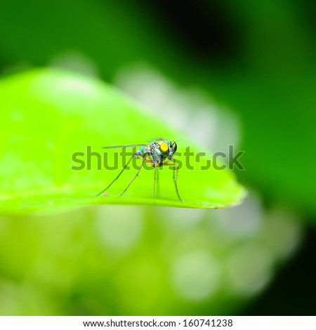 Beautiful Green insect - stock photo