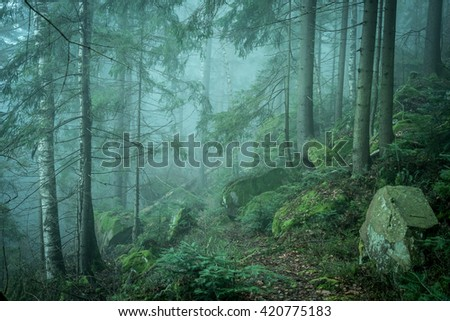 beautiful green landscape of misty wood