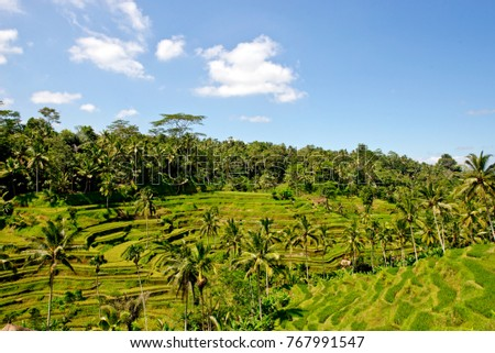 Beautiful green landscape of Tegallalang rice fields with rice terraces and palm trees in Ubud area, in Bali, Indonesia
