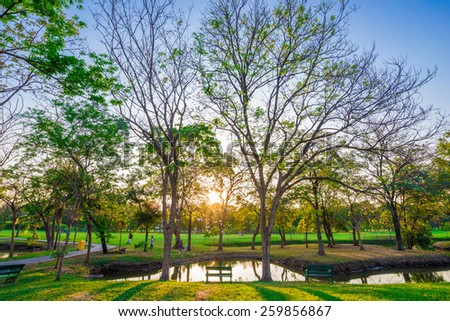 Beautiful green lawn in city park under sunny light at sunset time