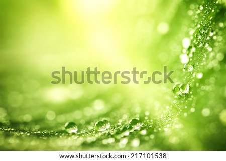 Beautiful green leaf with drops of water - stock photo