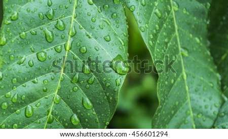 Beautiful green leaf with drops of water, after rain