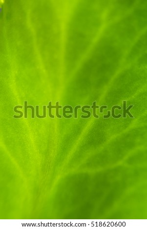 Beautiful green leaves in nature