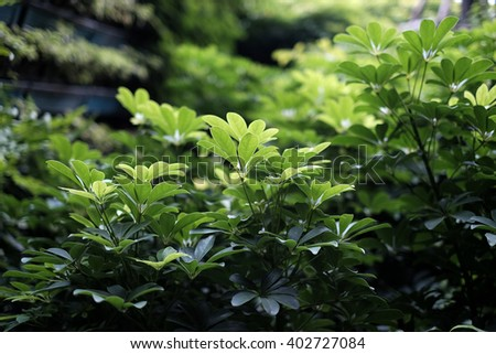 Beautiful green leaves in nature - Soft Focus - stock photo