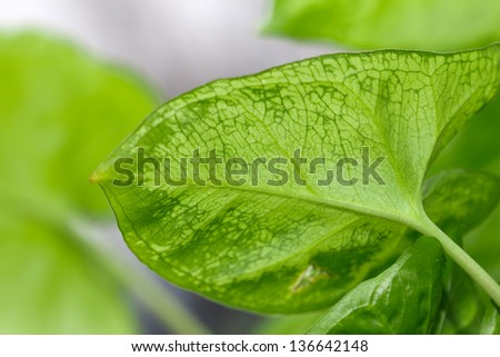 Beautiful green leaves in the background. macro - stock photo