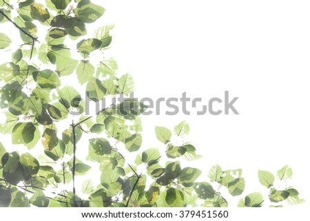 Beautiful green Leaves on the branches in the autumn forest. - stock photo