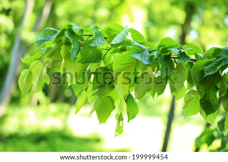 Beautiful green leaves on tree outdoors