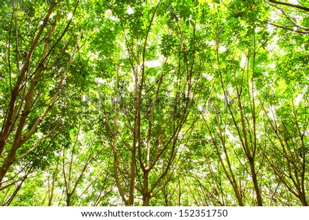 Beautiful green leaves under bright sky in summer