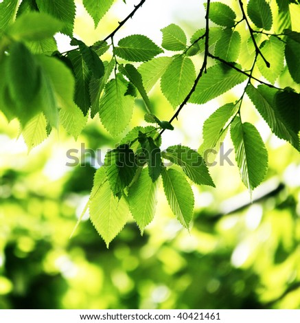 Beautiful green leaves under sunlight