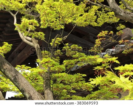 beautiful green leaves with branch in summer selection focus