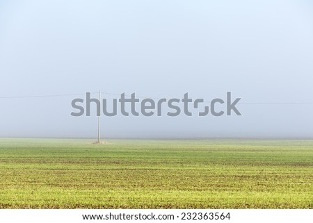 beautiful green meadow in heavy mist with lonely trees - stock photo