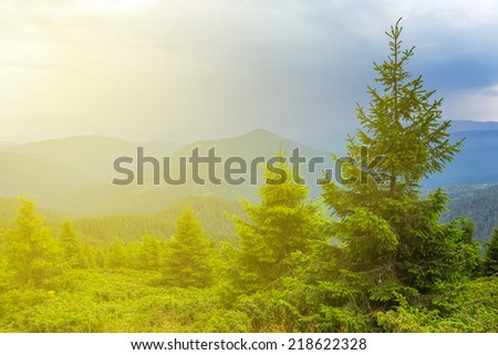 beautiful green mountain forest at the evening - stock photo