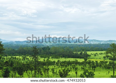 Beautiful green nature of meadows, forests and mountains.
