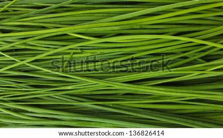 beautiful green onion chives closeup - stock photo