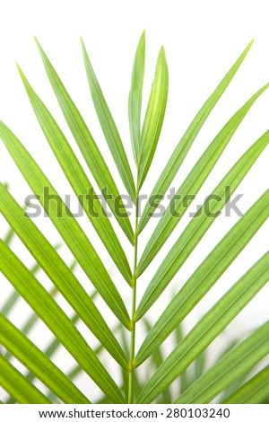 Beautiful green palm leaf on a white background - stock photo