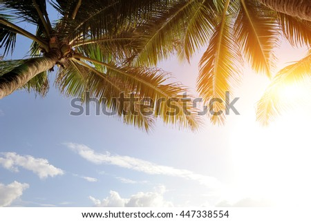 Beautiful green palm tree on blue sky background - stock photo