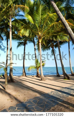 Beautiful green palm trees at tropical beach Palm Cove in Queensland, Australia  - stock photo