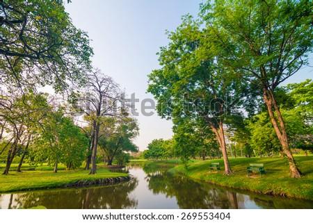 Beautiful green park tree and swamp, Serenity scence - stock photo