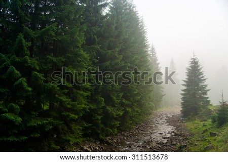 Beautiful green pine trees and river on Carpathian mountains in Ukraine