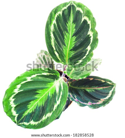 Beautiful green plant in the pot, view from above - stock photo