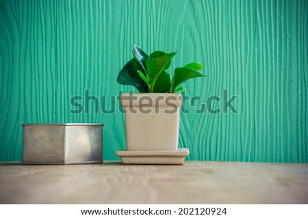 Beautiful green plant  on wooden table, green background - stock photo
