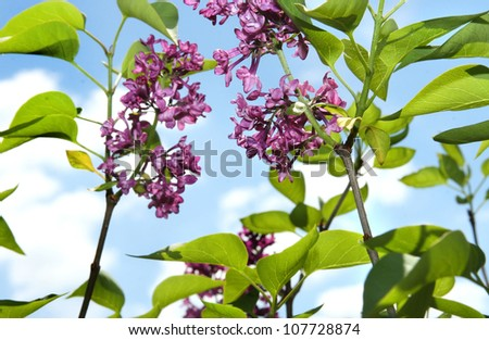 beautiful green plants against a background of blue sky - stock photo